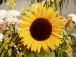 programare:teme_2016:sunflower.png